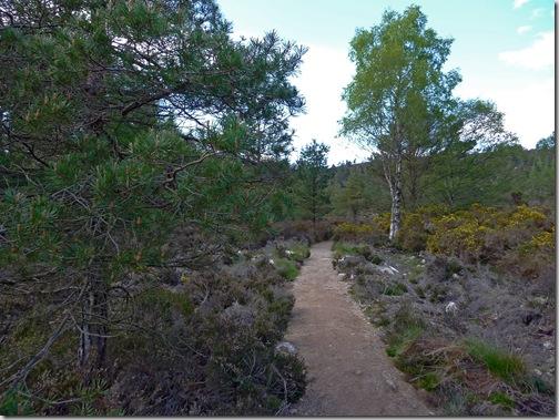 _vegetation